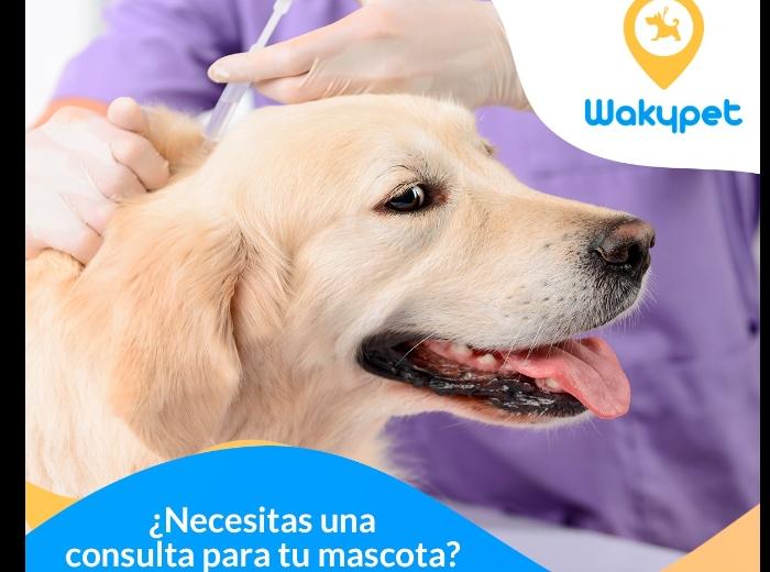 Wakypet Paseadores de perros.