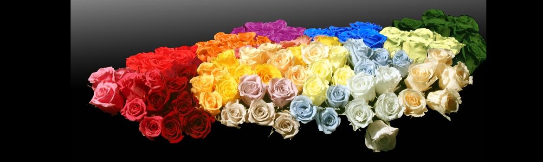CYAN FLOWERS (flores preservadas de exportacion)